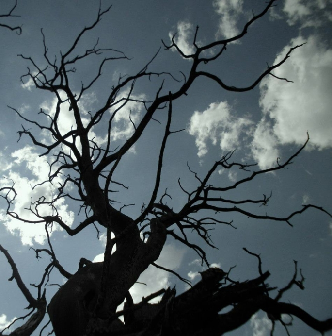 Mary Baker_Tree Tall